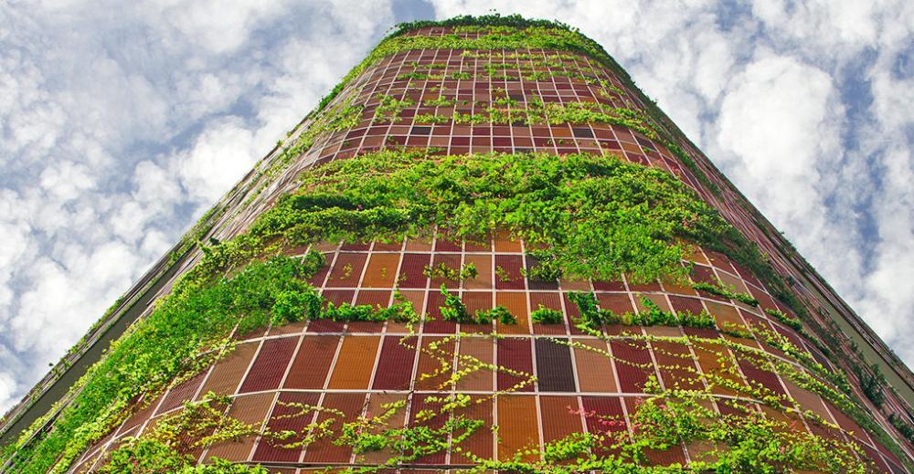 Tòa nhà được cây leo bao quanh ở Singapore